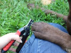 Epica Dog Nail Clipper Review