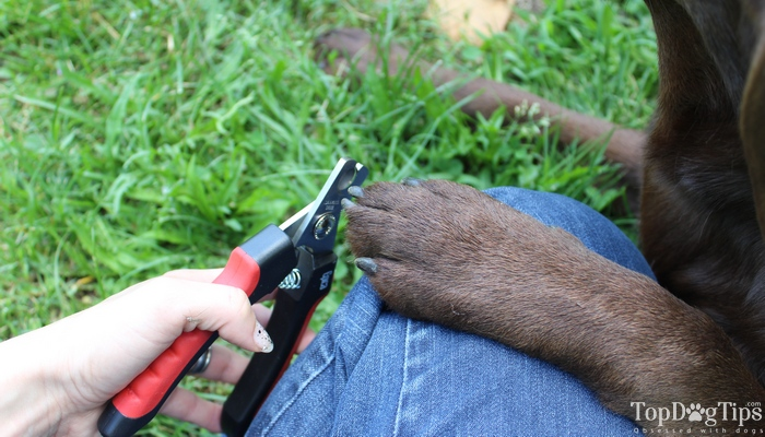 How to Cut Dog's Nails Correctly