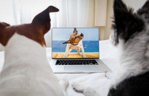 Best Dog Videos