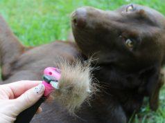 dog shedding home remedy