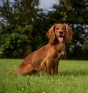 Most Popular Dog Breeds