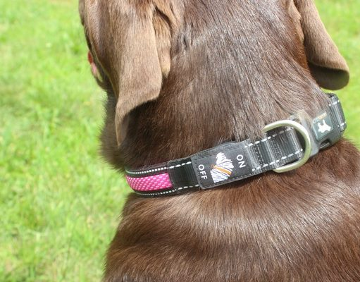 Paw 4 Tech LED Collar Review