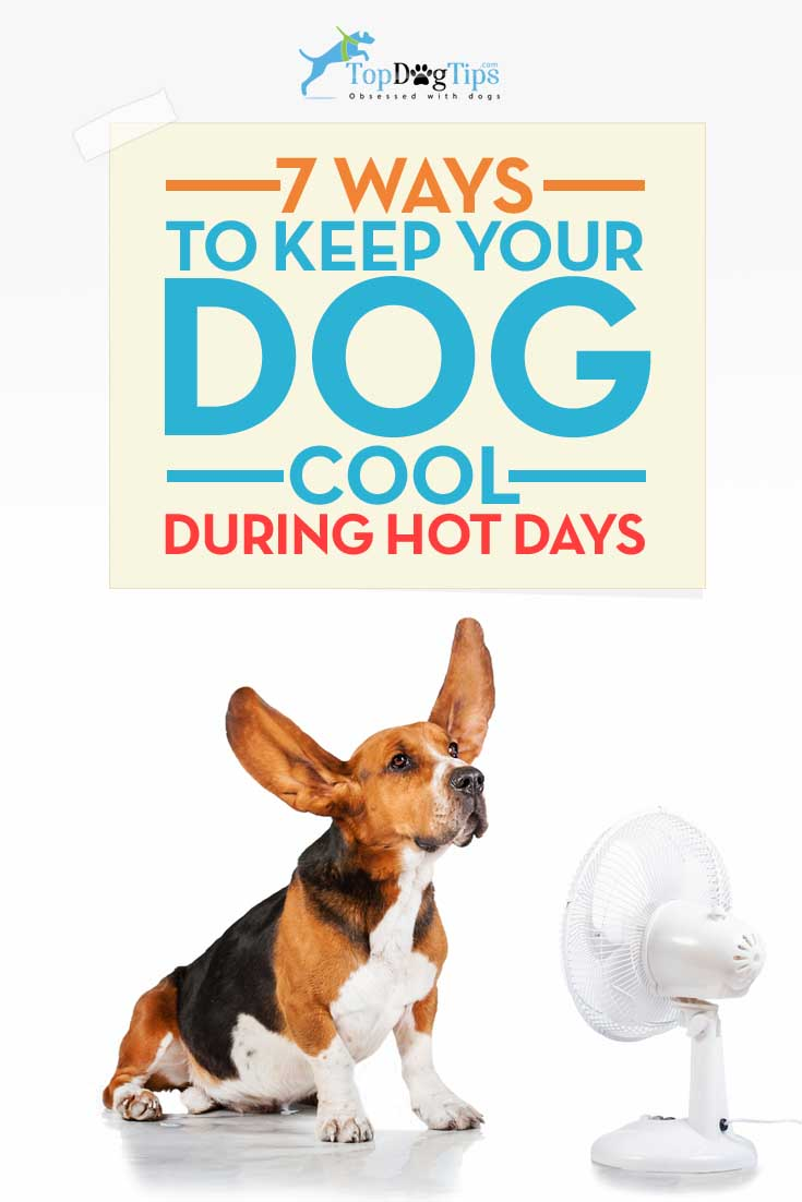 7 Ways To Keep Your Dog Cool In Summer Top Dog Tips