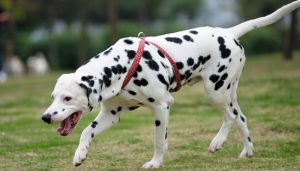 Best Dogs To Run With