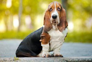 Best Dog Breeds For Elderly Wonem