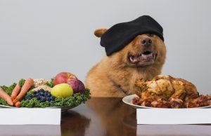 Can Dogs Go Vegan