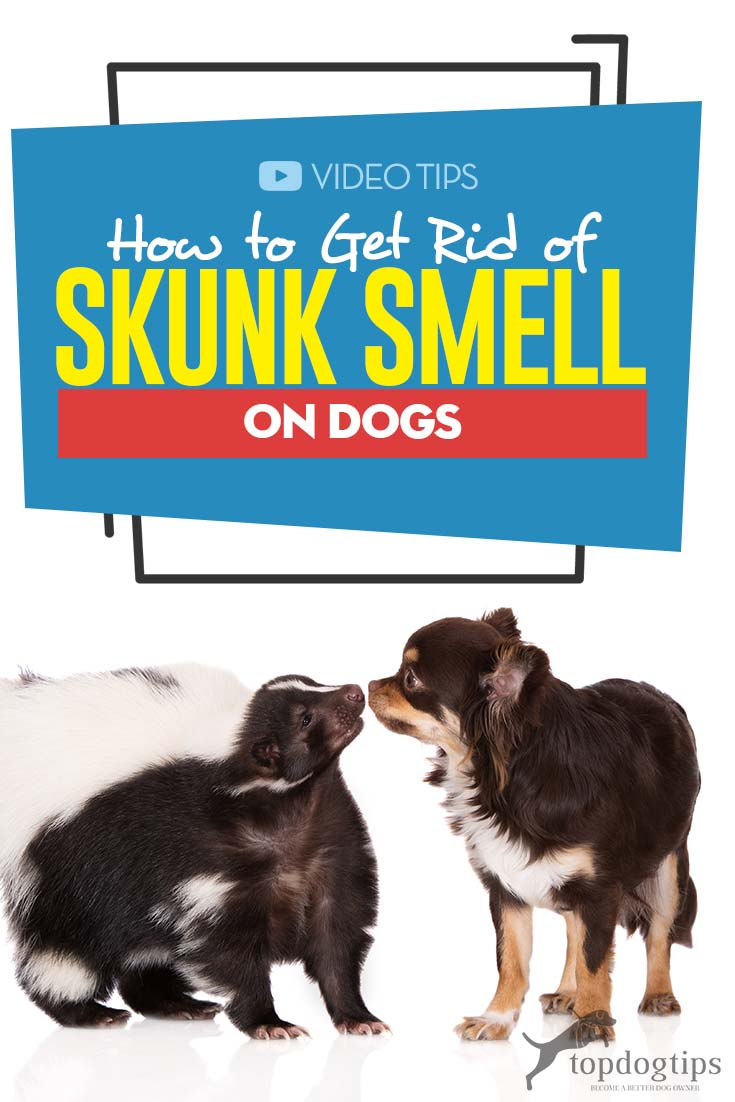 Guide on How to Get Rid of Skunk Smell on Dogs