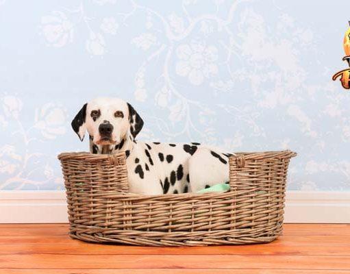 Health Benefits of Dog Beds