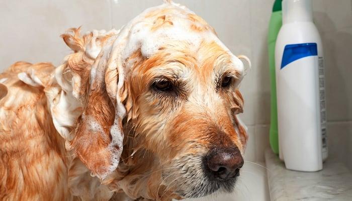 How To Make Dog Shampoo