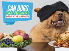 The Vegan Dog - Can Dogs Be Vegan or Vegetarian