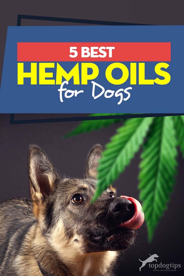 Top 5 Best Hemp Oil for Dogs
