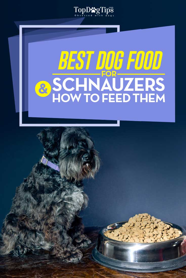 Best Dog Food For Schnauzers In 2020