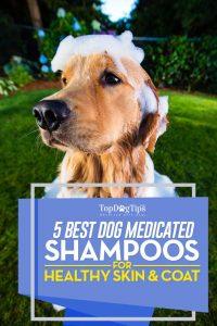 Top 5 Best Medicated Dog Shampoo Brands