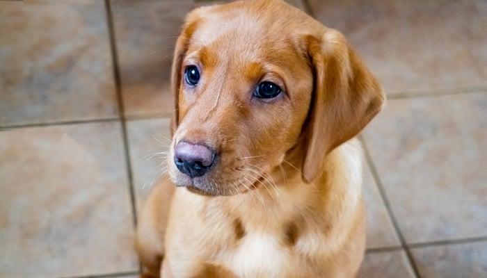 Ceramic or Porcelain Tile Floor for Dogs