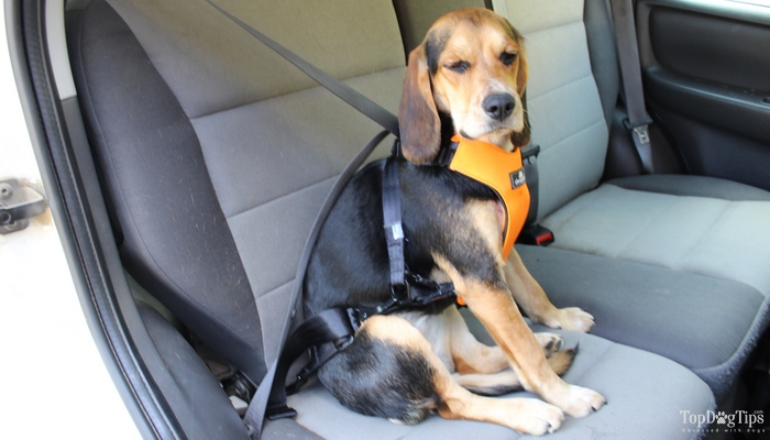 Differences Between The Three Seat Belts for Dogs