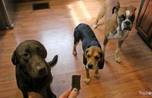 Carob Crunchies Homemade Dog Treats Recipe