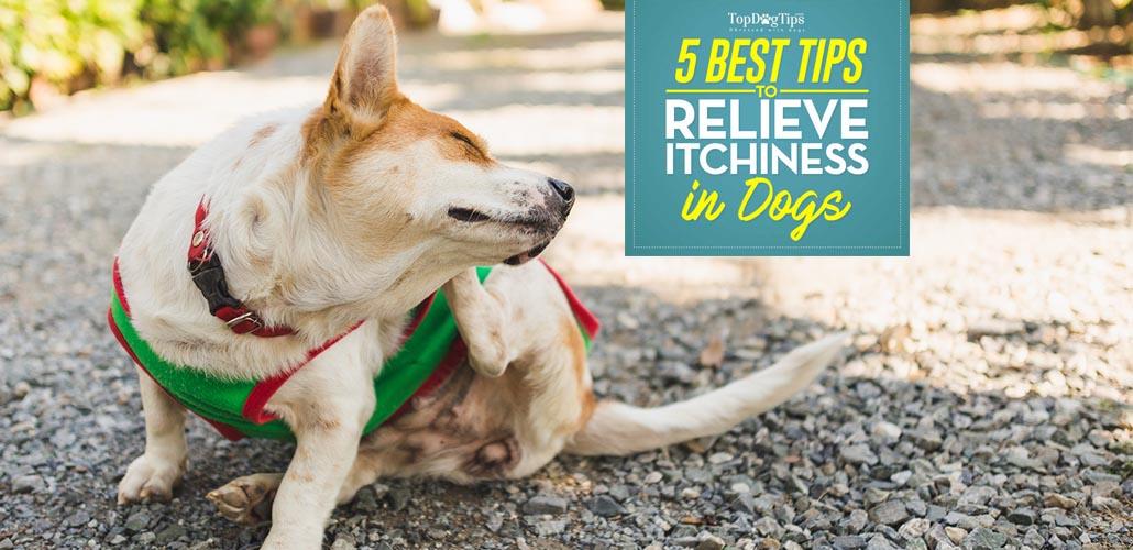 Adoption Home Study Tips Dogs