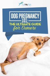 Dog Pregnancy Guide 101