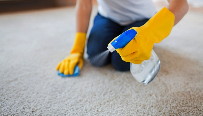 How To Get Dog Hair Out Of Carpet A Video Cleaning Guide