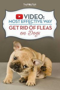 How To Remove Fleas From A Dog Video