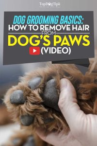 How To Remove Hair From Dog Paws Video