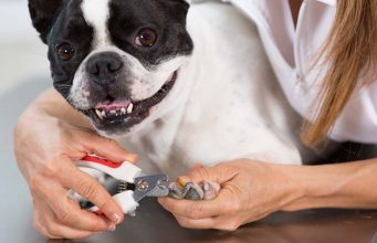 How To Train A Dog To Enjoy Grooming and Stay Calm When Groomed