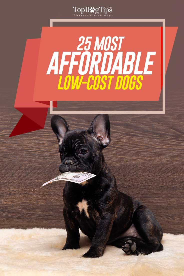 25 Most Affordable Low Cost Dog Breeds That Anyone Can Adopt