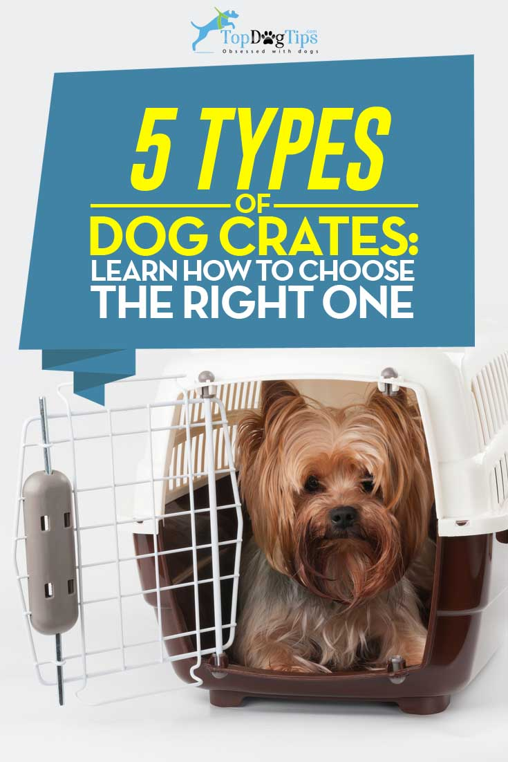 5 types of dog crates and how to choose a perfect pet for Job lot dog crate