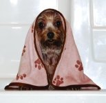 Best Pet Towels for Dogs
