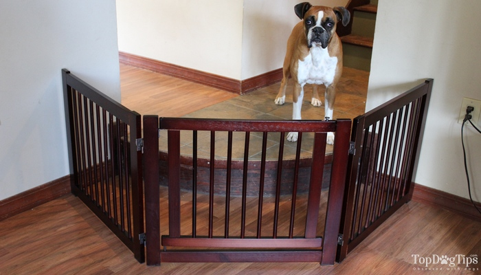Best Dog Gates For Stairs Indoors We Ve Compared Top Brands 2018