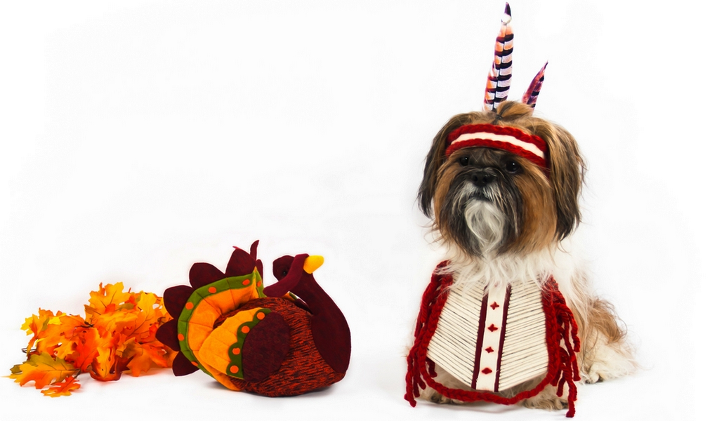 Best Dog Thanksgiving Clothes and Costumes  sc 1 st  Top Dog Tips & 16 Best Dog Thanksgiving Clothes and Costumes for the Holiday