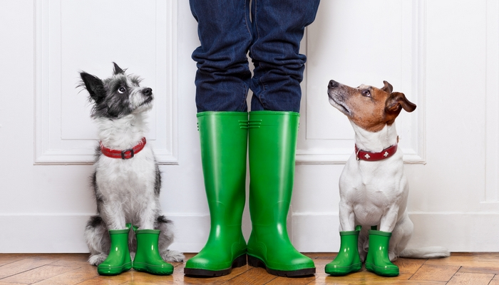 Best Waterproof Dog Walking Boots