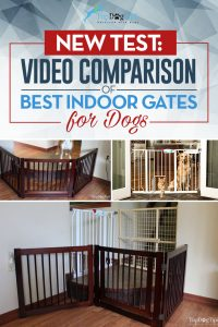 Compare Best Dog Gates Reviews