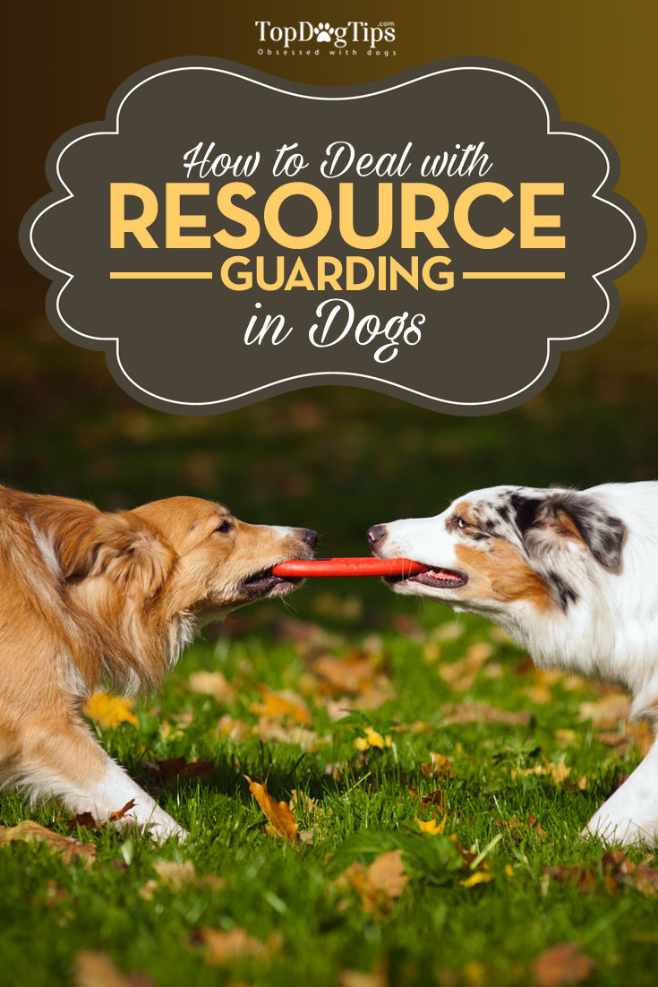 Dealing With Resource Guarding in Dogs