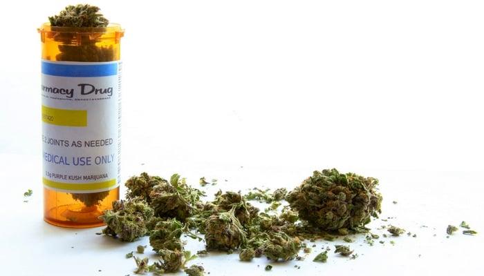 Dog Gets Life Back Thanks to Cannabis Treats