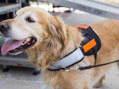 Service Dog's Skills Fascinate Social Media Members