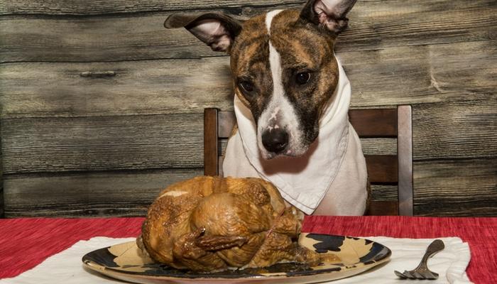 Thanksgiving Dinner Recipes for Dogs
