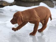 What Is the Best Ice Melt Safe for Pets