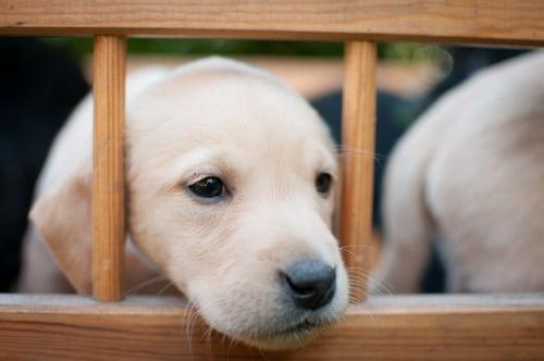 Best Dog Gate