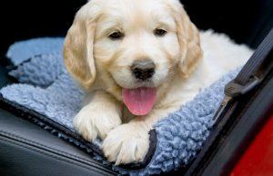 Best Car Seat Cover for Dogs