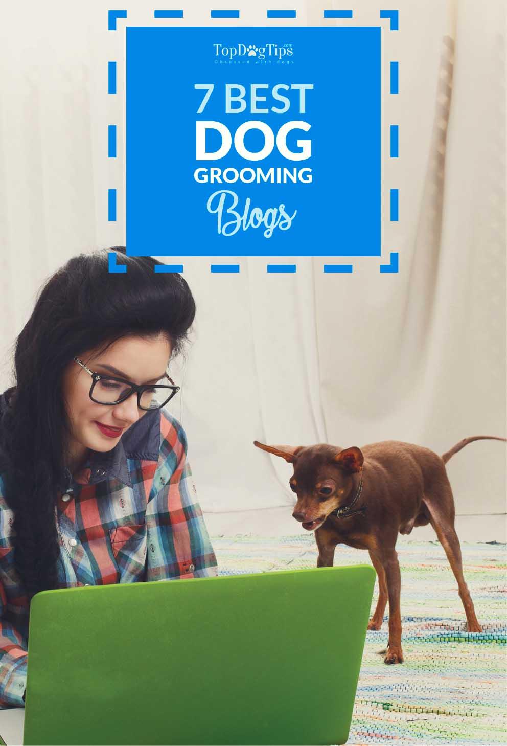 Sundays recap 7 best dog grooming blogs top dog tips best dog grooming blogs solutioingenieria Image collections