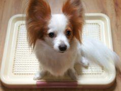 Best Indoor Pet Patio Potty for Dogs