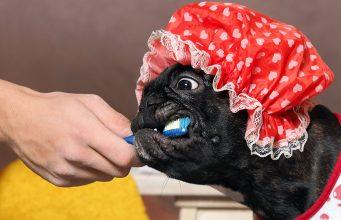 Dog Teeth Brushing Checklist