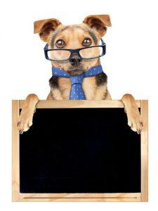 Free dog training tutorial videos