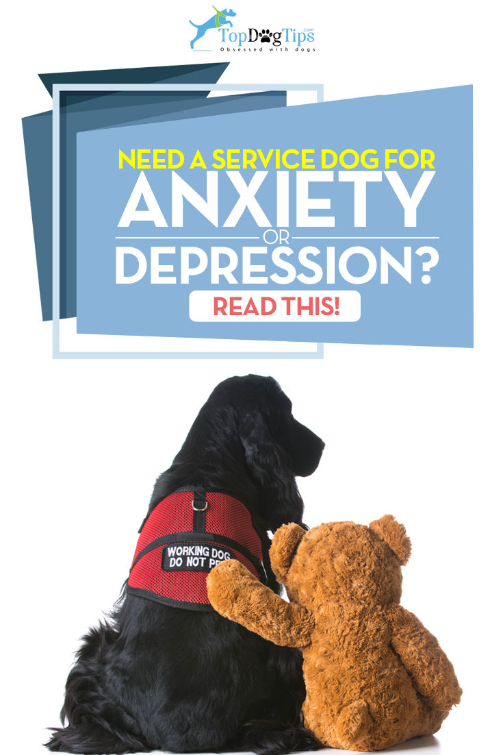 How To Get A Service Dog For Anxiety Or Depression And The Costs Of It