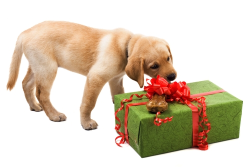 Online Dog Supplies Retailers with Best Deals and Discounts Until 2016's End