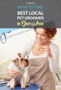Tips How To Find Local Dog Groomers in Your Area