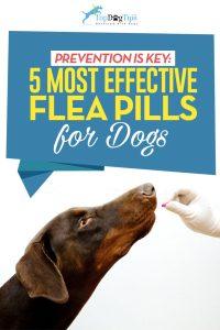 Top Best Flea Pills for Dogs