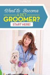Where to Begin Your Career As a Pet Groomer Guide