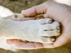 Animal Shelter Employees Celebrate Empty Building